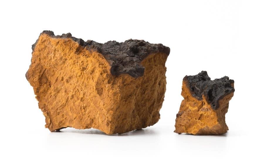 morceaux de champignon chaga