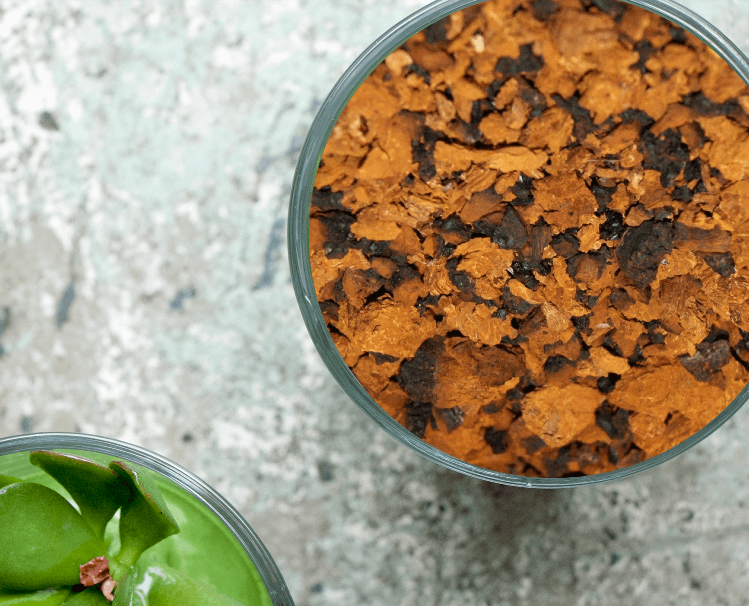 chaga superfood
